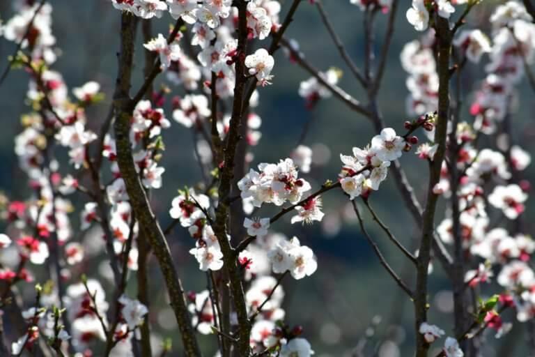 Καιρός αύριο: Με καλοκαιρία η έξοδος του τριημέρου της 25ης Μαρτίου