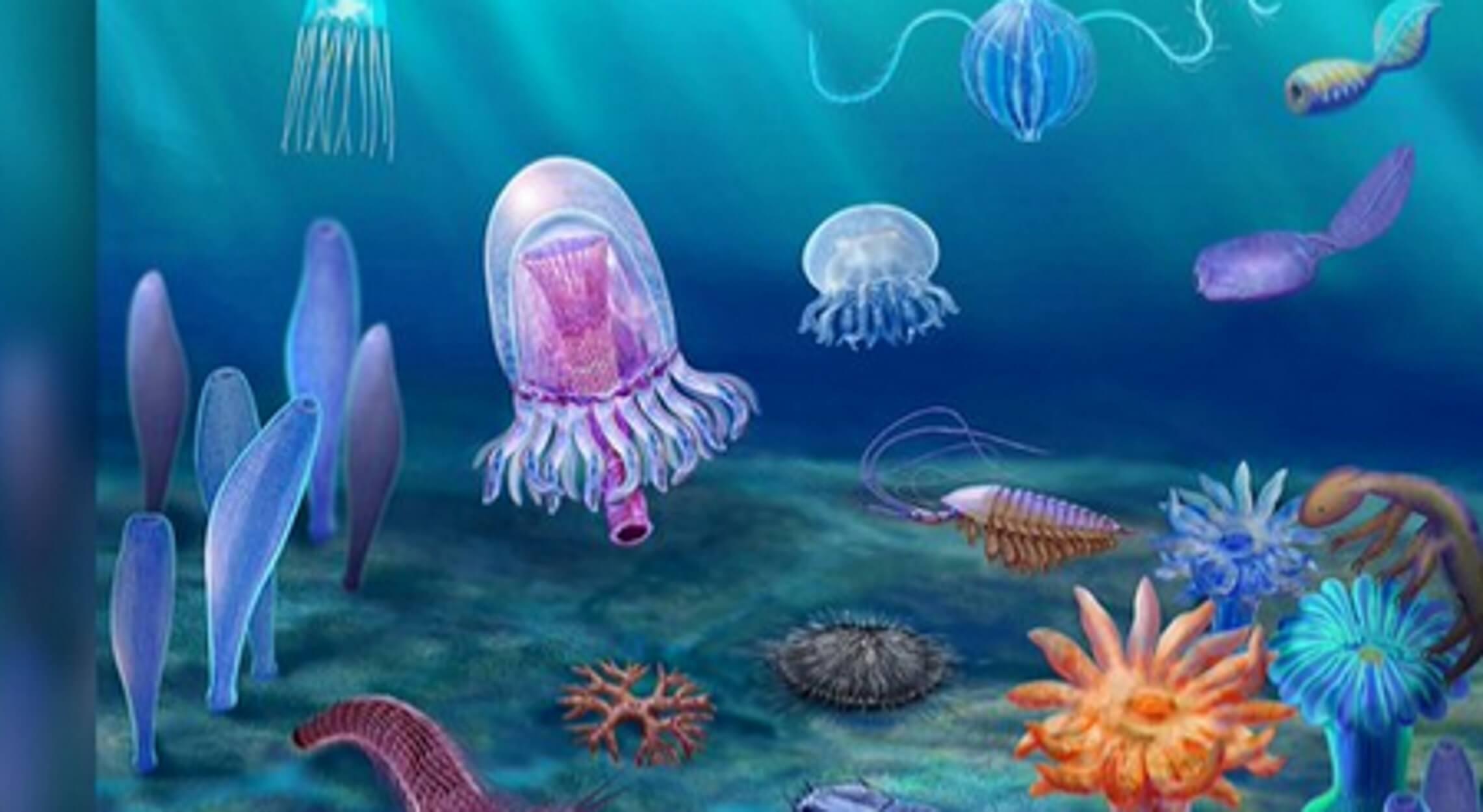 Συγκλονιστικό! Ανακαλύφθηκαν απολιθώματα από αρχέγονα ζώα - Ζούσαν στη Γη πριν από 500 εκατομμύρια χρόνια