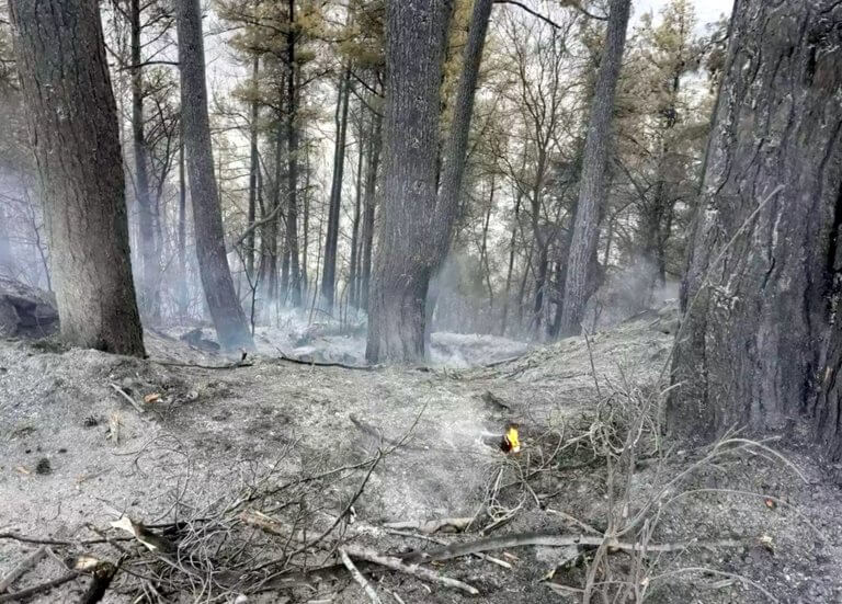 Έσβησε η φωτιά στα ορεινά των Τρικάλων