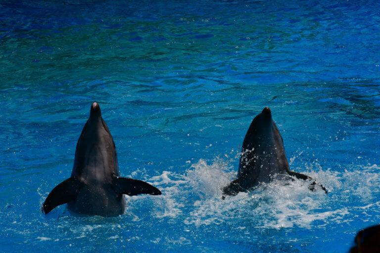 Πιθανές ενδείξεις Αλτσχάιμερ στον εγκέφαλο δελφινιών!