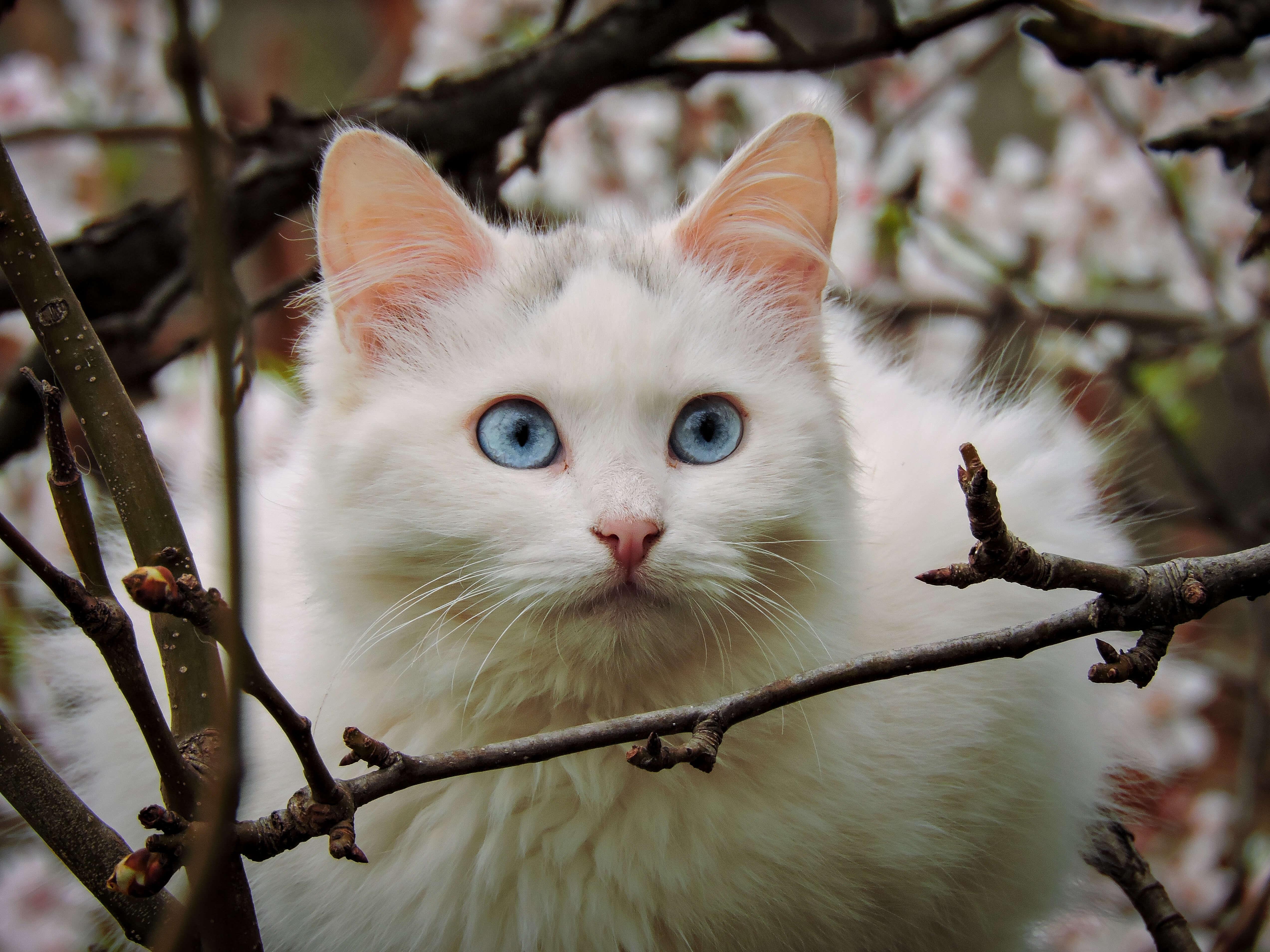 Ρέθυμνο: Σκοτώνει γάτες και δίνει στο facebook τη συνταγή για φόλες – Οργή για το επίμαχο μήνυμα [pic]