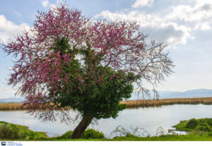 Γιάννης Καλλιάνος: Καιρός για βόλτες – Ανοιξιάτικο πενθήμερο
