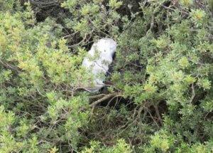 Θεσπρωτία: Κοίταζε επίμονα και έβλεπε αυτή την εικόνα – Η αυτοψία στο σημείο έλυσε το μυστήριο [pics]