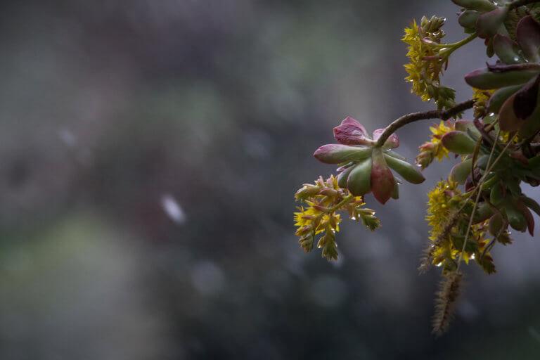 Καιρός: Απότομος χειμώνας στην Μακεδονία – Στους 0 βαθμούς ξύπνησε η Φλώρινα! | Newsit.gr