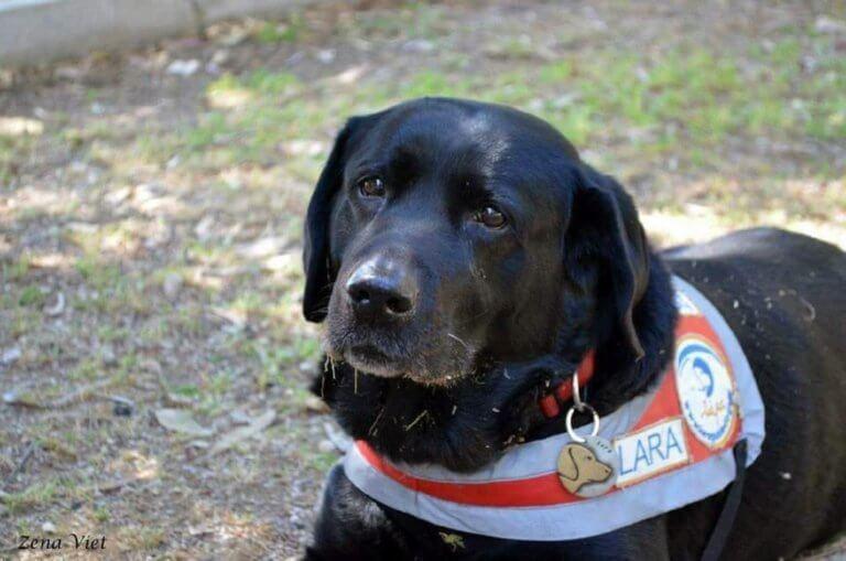 Πέθανε η Λάρα, ο πρώτος σκύλος – οδηγός για τους τυφλούς στην Ελλάδα