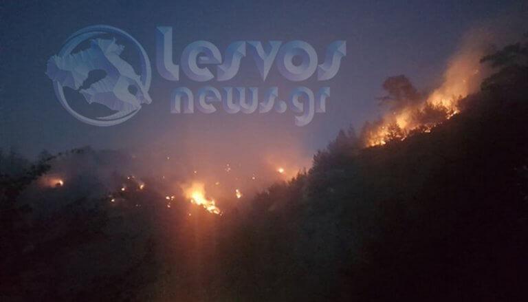 Νύχτα στις φλόγες! Αγωνιούν οι κάτοικοι στη Λέσβο – video