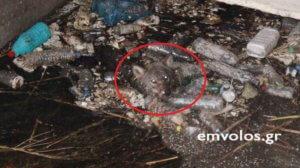 Ημαθία: Εγκλωβισμένος λύκος διασώθηκε από πυροσβέστες