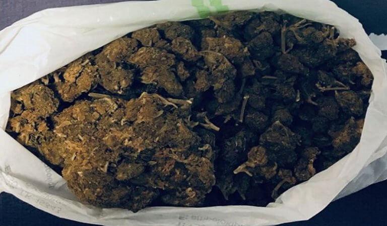 Μύκονος: Ο σκύλος της αστυνομίας μύρισε τα ναρκωτικά!