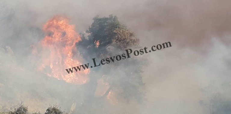 Λέσβος: Μεγάλη φωτιά σε εξέλιξη στο Πλωμάρι | Newsit.gr