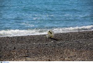 Η θάλασσα ξέβρασε πτώμα στη Μύκονο!