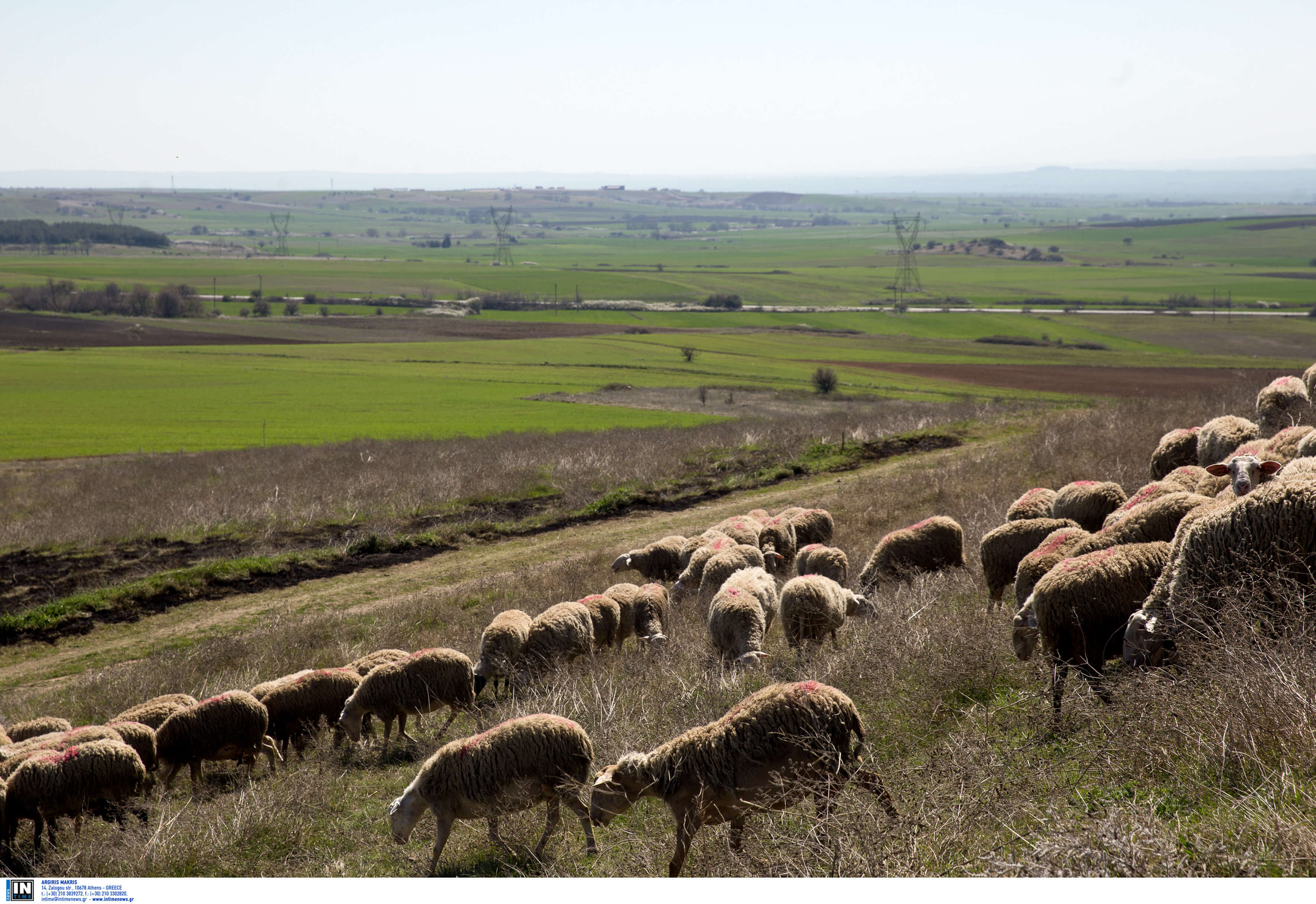 Χαμός και ξύλο μεταξύ κτηνοτρόφων στην Κρήτη!