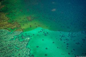 Εντοπίστηκε ο πρώτος κοραλλιογενής ύφαλος στη Μεσόγειο!