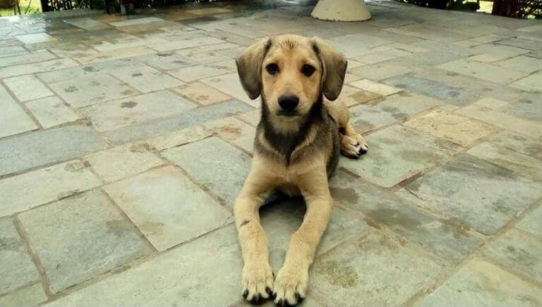 Μυστηριώδεις εξαφανίσεις αδέσποτων σκύλων στην Αμαλιάδα