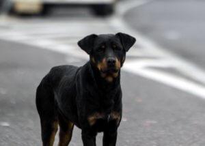 Μήνυση στο δήμο Κοζάνης για επιθέσεις από αδέσποτους σκύλους κατέθεσε ο πρύτανης του ΤΕΙ