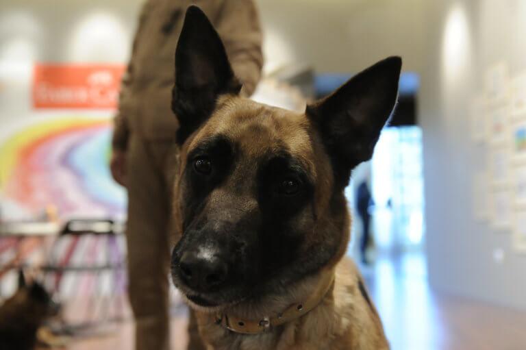 Άρτα: Ο σκύλος της αστυνομίας δεν έκανε λάθος ούτε αυτή τη φορά – Νέα σύλληψη σε χωριό!