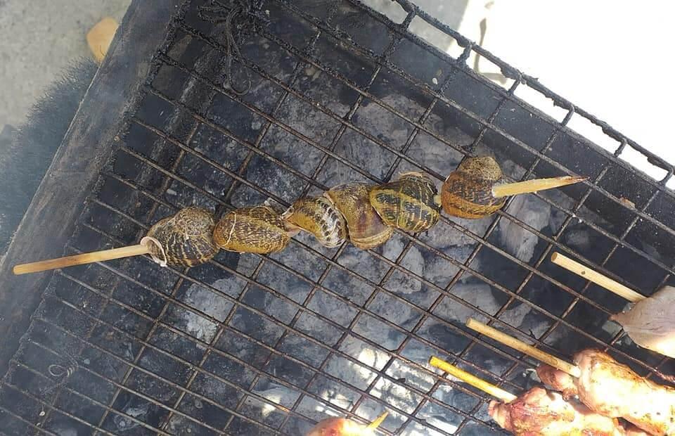 Κρήτη: Χοχλιοί… σουβλάκι – Νέα σπεσιαλιτέ στη Μεσαρά [pics]