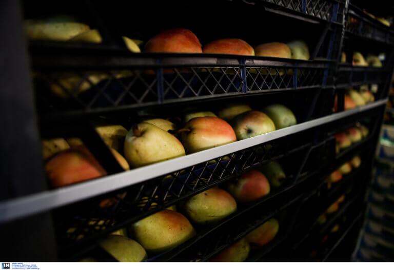 Δέσμευσαν 2,8 τόνους φρούτα στον Ρέντη