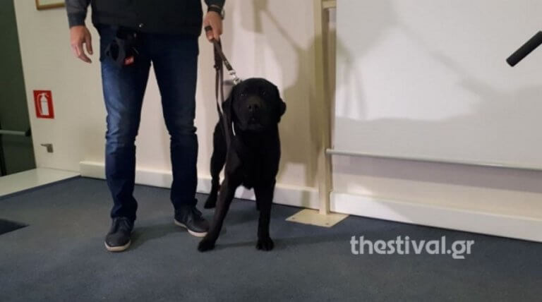 Σέρρες: Ο σκύλος μπλόκαρε τα ναρκωτικά