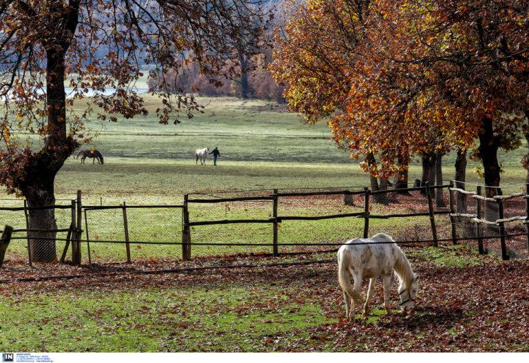 Σοκ στα Γιάννενα: Εκτέλεσαν τρία άλογα μέσα σε χωράφι!