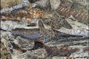 Απολιθώματα ψαριών, ζώων και δέντρων από τη μέρα της «Αποκάλυψης»