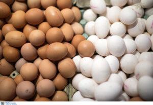 Δεσμεύτηκαν 33.000 αυγά και ακατάλληλα κρέατα και αλλαντικά στο λιμάνι του Πειραιά