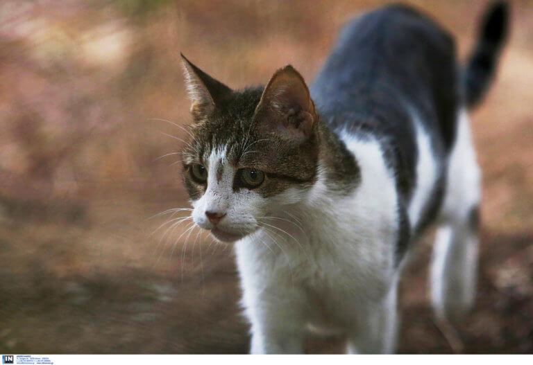 Οι γάτες μπορούν να αναγνωρίσουν… το όνομά τους!