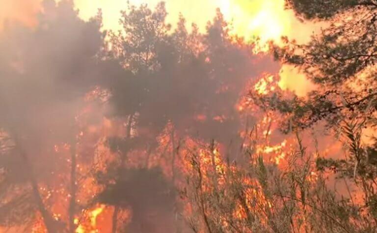 Ηλεία: Νέες εικόνες καταστροφής από τη φωτιά στο δάσος της Στροφυλιάς – Το έγκλημα και η τιμωρία – video