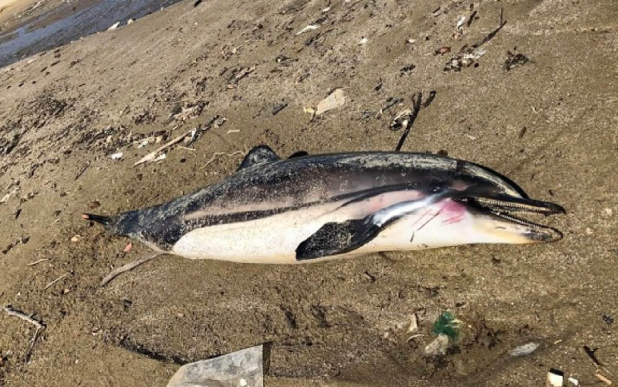 Πήλιο: Η εικόνα στην παραλία πάγωσε τους πάντες – Τα σενάρια πίσω από τη φωτογραφία [pic]