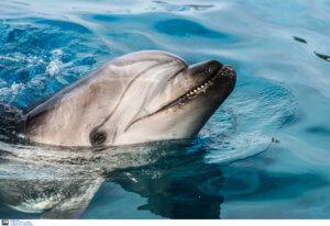 Νεκρά δελφίνια στο Αιγαίο εξαιτίας της τουρκικής άσκησης «Γαλάζια Πατρίδα»