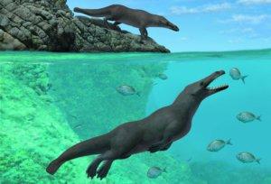 Τετράποδη φάλαινα περπατούσε στην ξηρά και κολυμπούσε στη θάλασσα!