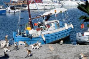 Γάτες: Γιατί πρέπει να μένουν μαζί μας – Πότε εξημερώθηκαν – Πόσες υπάρχουν!