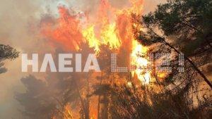 """Καίγεται το """"διαμάντι"""" της Πελοποννήσου! Ανεξέλεγκτη η φωτιά στο προστατευόμενο δάσος της Στροφυλιάς"""