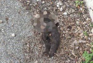 Νεκρό βρέθηκε αρκουδάκι στα Γρεβενά