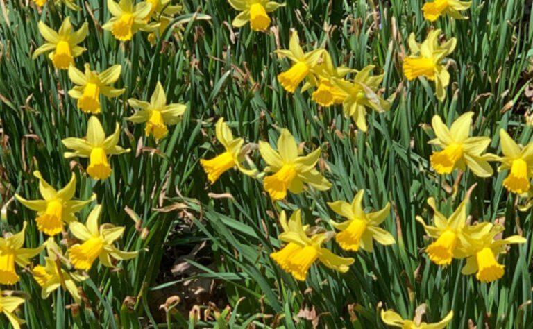 Ένα λουλούδι προς τιμήν της Μπέτι Μίντλερ στον Βοτανικό Κήπο της Νέας Υόρκης