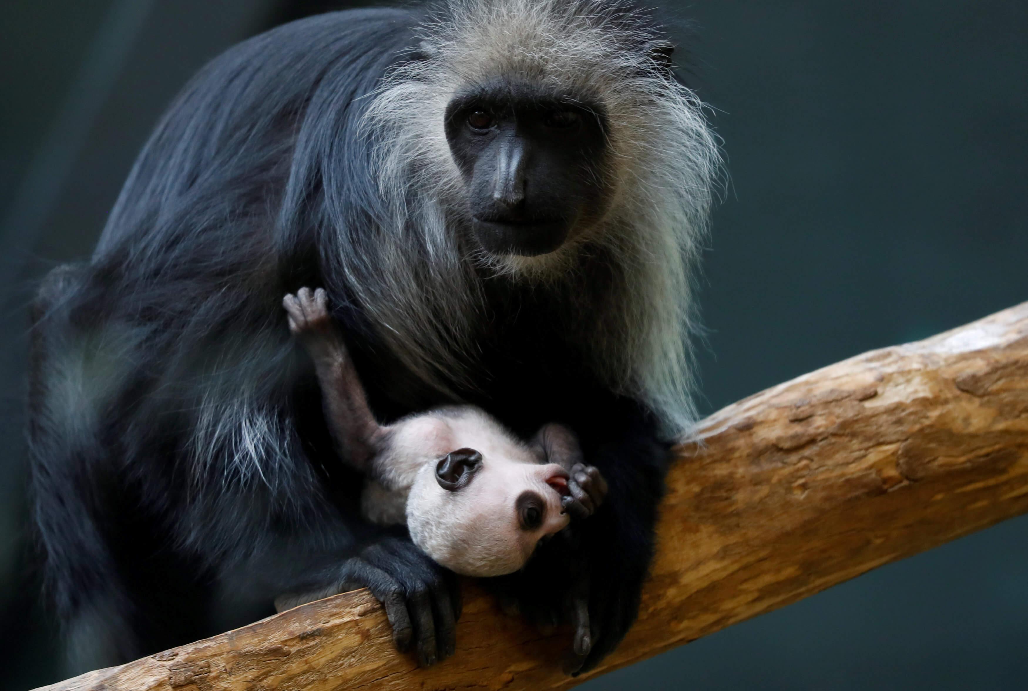 Η μητρική αγκαλιά… σε μια εικόνα! | Newsit.gr