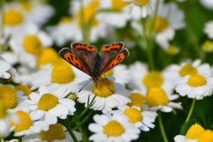 Πεταλούδα μαζεύει γύρη και… άλλες εικόνες Άνοιξης στο Ναύπλιο [pics]