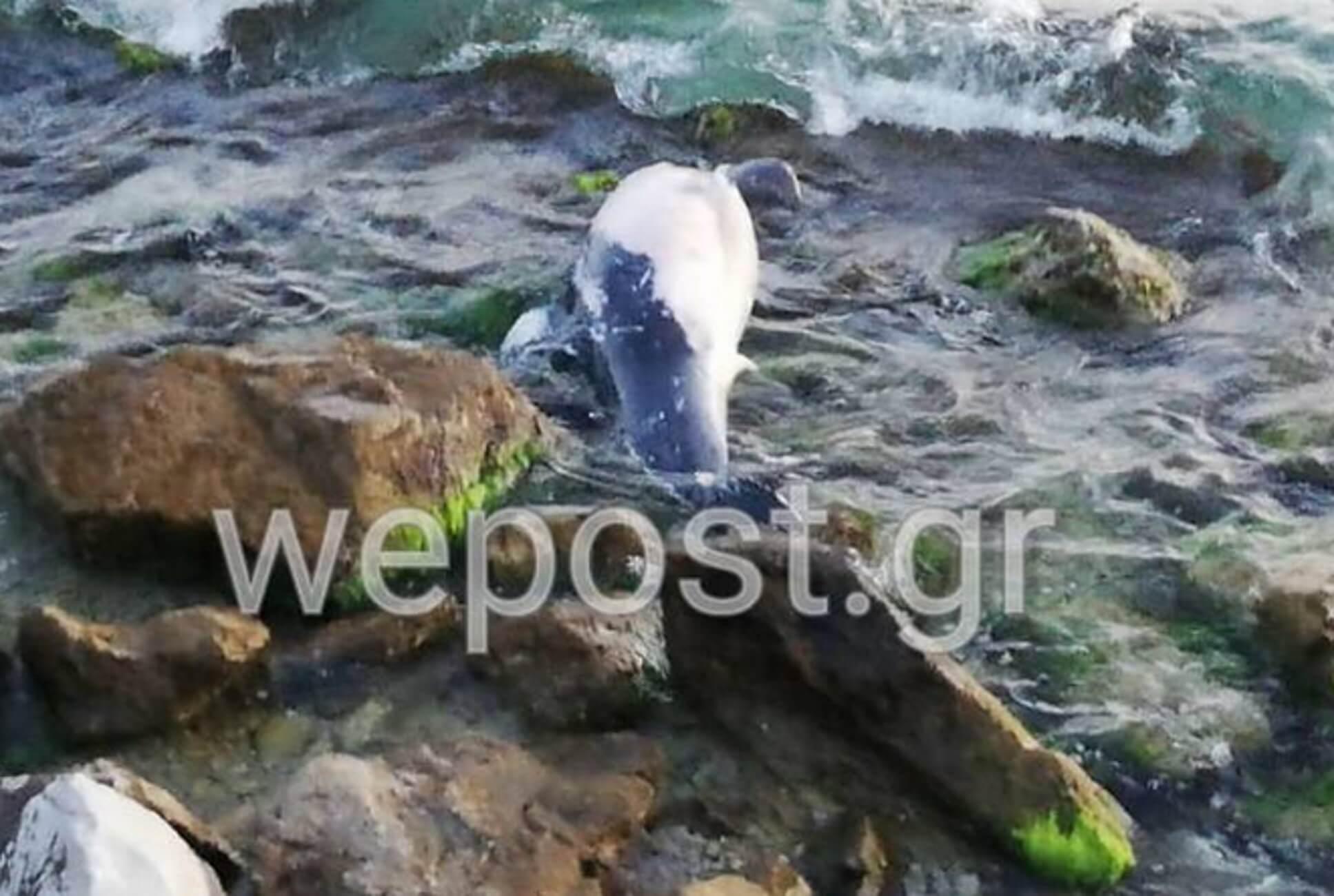 Θεσσαλονίκη: Κοίταξαν στα βράχια της παραλίας και είδαν εικόνες που τους χάλασαν το απόγευμα [pic, video]