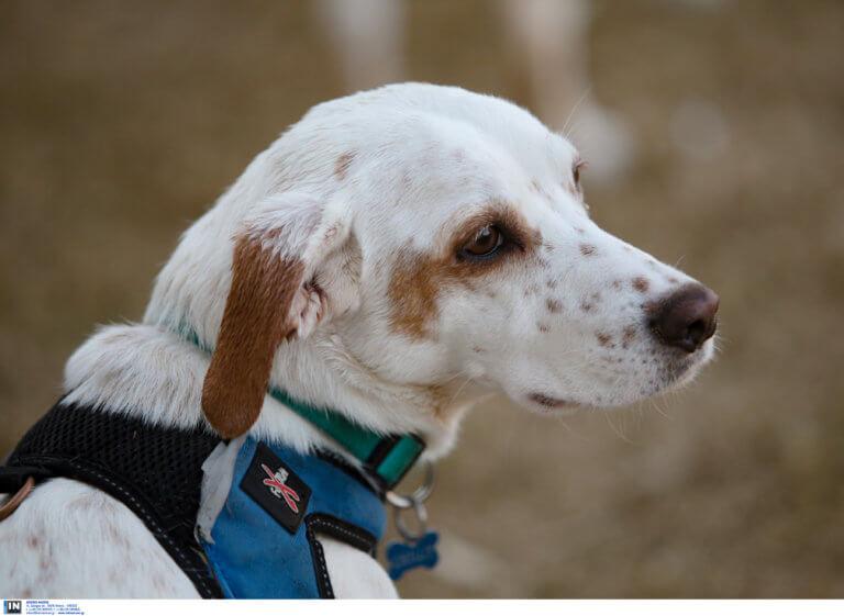 Θεσσαλονίκη: Πάρκο σκύλων στην περιοχή των Πεύκων – «Δώρο» σε φιλοζωική οργάνωση για το έργο της!