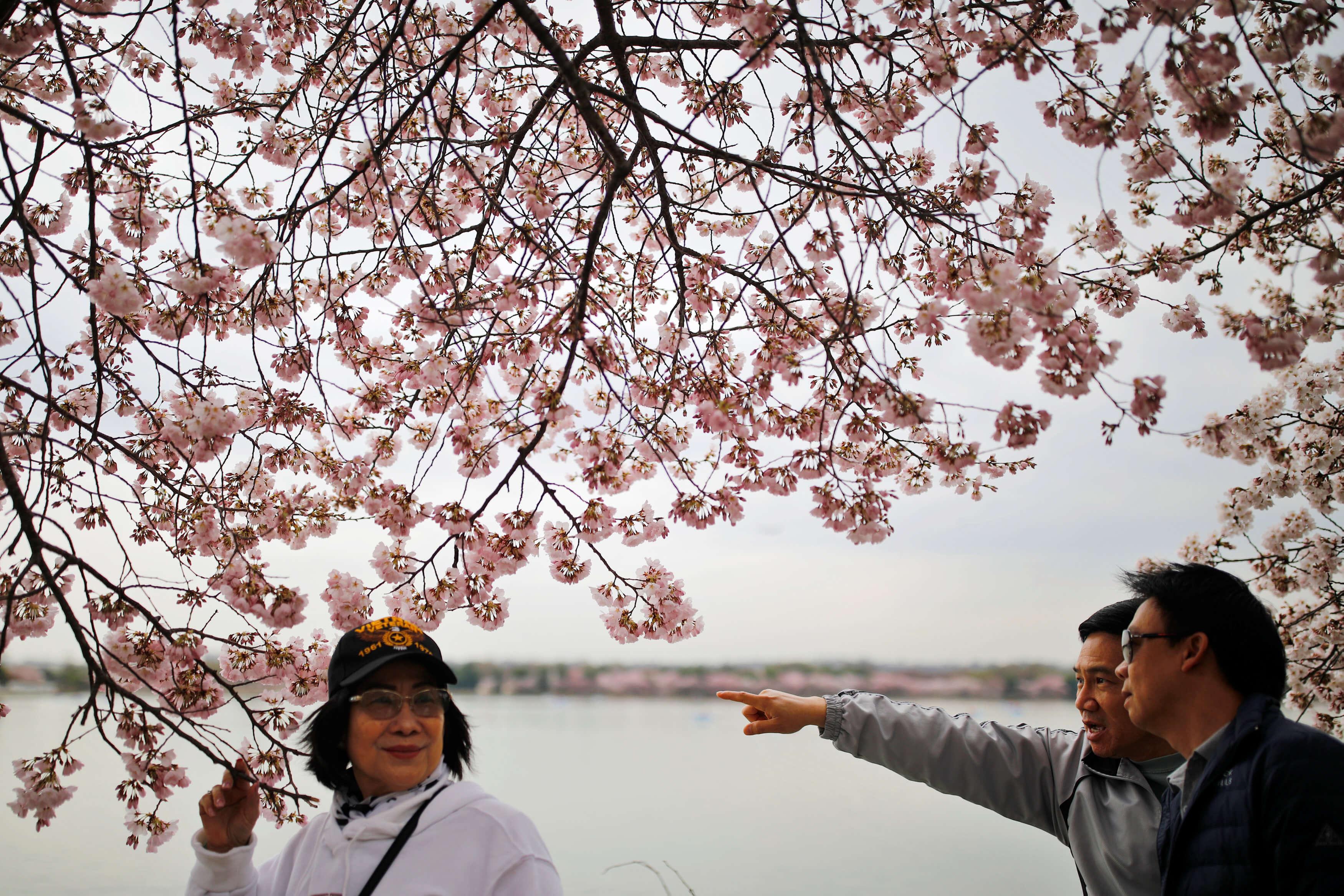 Παρθένοι ετών 40! Στην Ιαπωνία δεν…