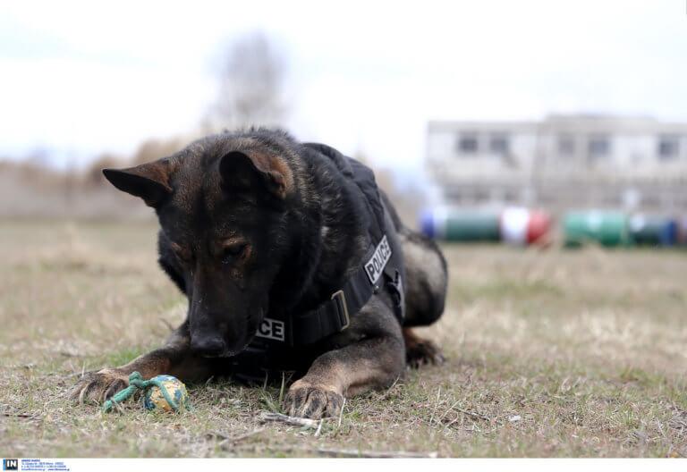 Πιερία: Ο αστυνομικός σκύλος… έβγαλε «λαβράκι»!