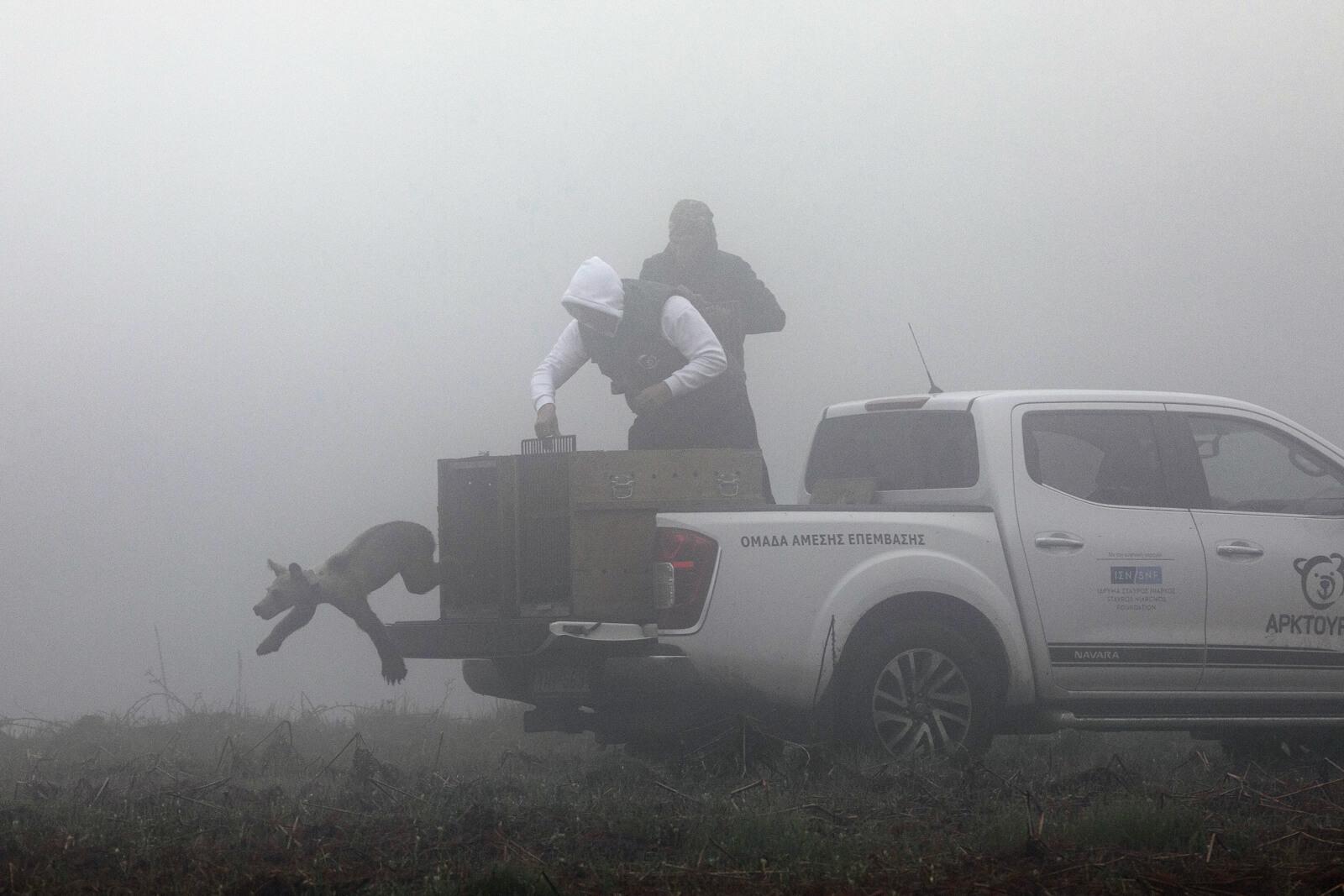 Φλώρινα: Έτσι επέστρεψαν στη φύση πέντε ορφανά αρκουδάκια – Μοναδικές εικόνες εντός και εκτός συνόρων [pics]