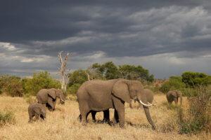 Εφιαλτική πρόβλεψη: Τα πιο μεγάλα ζώα θα έχουν εξαφανιστεί σε 100 χρόνια!