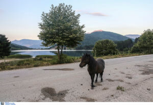 Πανικός στην Αττική Οδό! Άλογο έκοβε βόλτες στη μέση του δρόμου