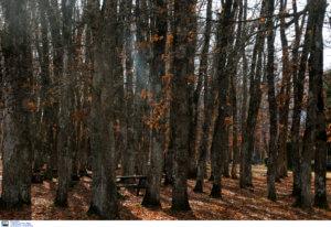 Κομοτηνή: Κρατούσαν σε δάσος τους συμπατριώτες τους και ζητούσαν λεφτά!