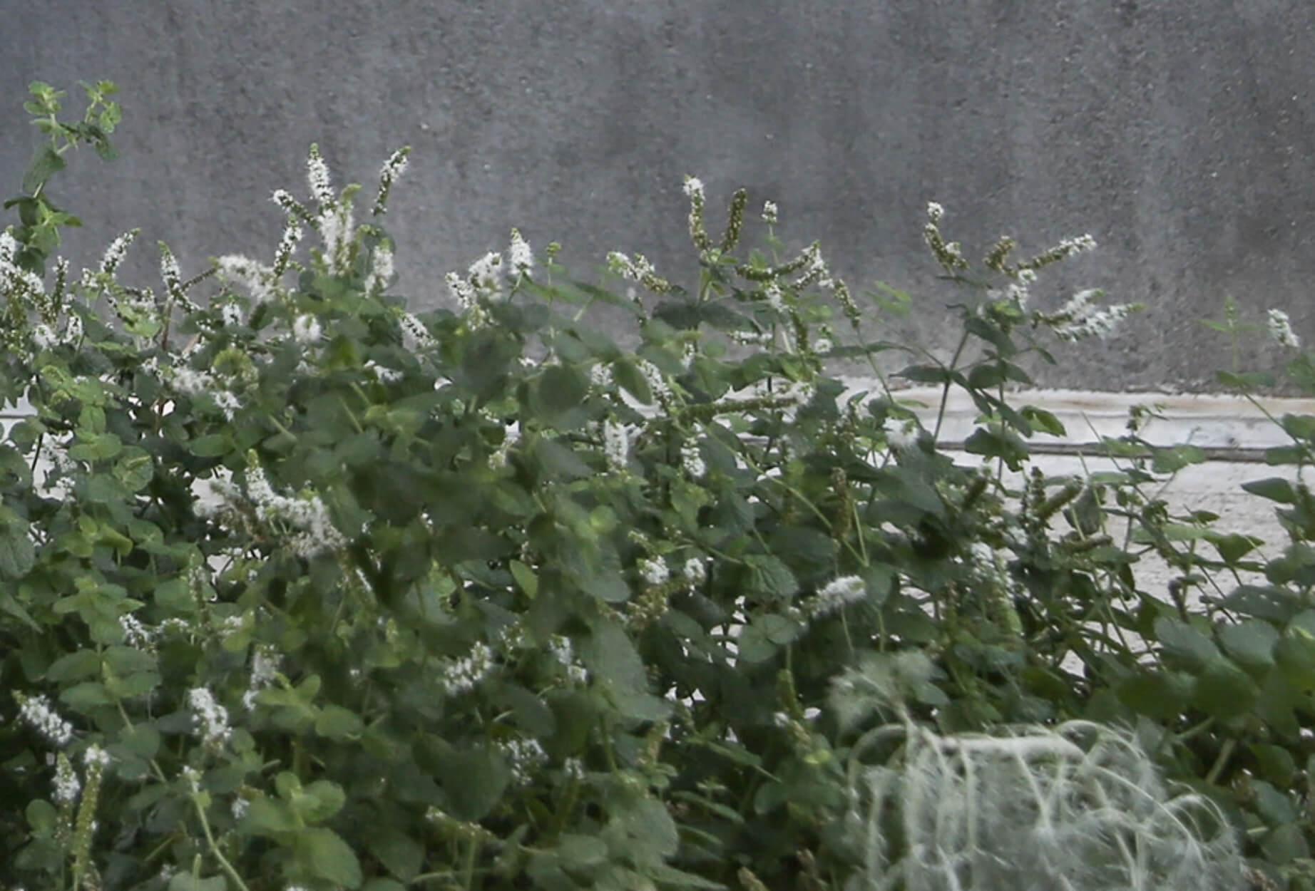 Αυτά είναι τα βότανα που πρέπει να επιλέξετε για τις αλλεργίες της άνοιξης!