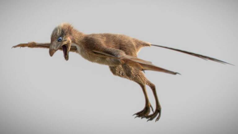 Κίνα: Ανακαλύφθηκε ένας ασυνήθιστος μικροσκοπικός δεινόσαυρος με φτερά νυχτερίδας