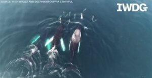 Μοναδική σκηνή! Κάμερα κατέγραψε δελφίνια να παίζουν με φάλαινες