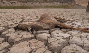 Λεονάρντο ΝτιΚάπριο: Αφηγητής και παραγωγός του σοκαριστικού ντοκιμαντέρ για την κλιματική αλλαγή! video