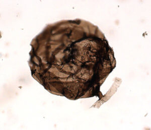 Ο αρχαιότερος μύκητας είναι ενός δισεκατομμυρίου ετών – Ανακαλύφθηκε στον αρκτικό Καναδά