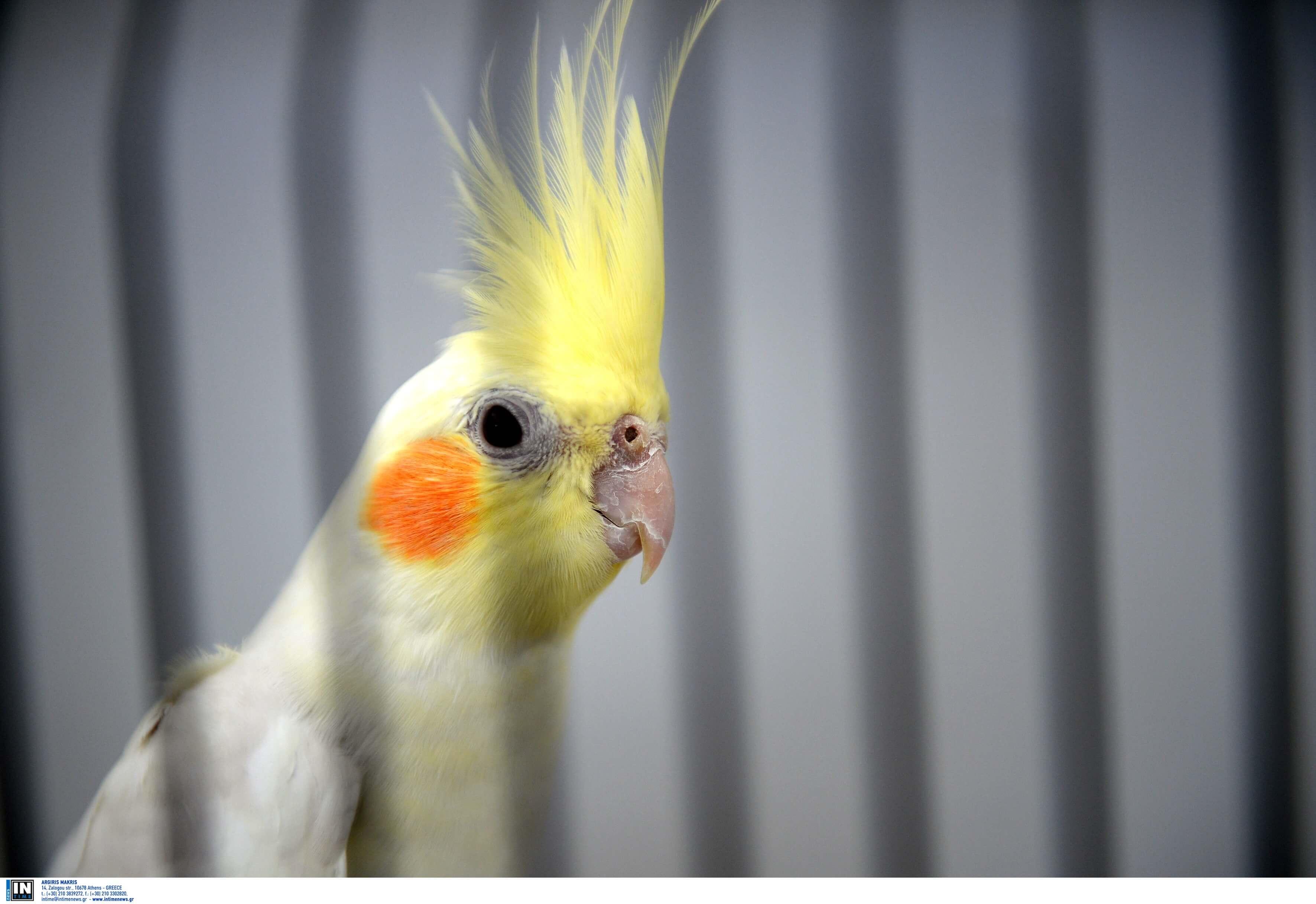 ωδικά πτηνά